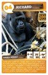 Richard - Gorila nížinná