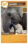 Shanti - Slon indický