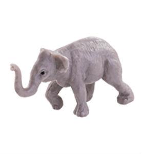 Slon indický - Sita