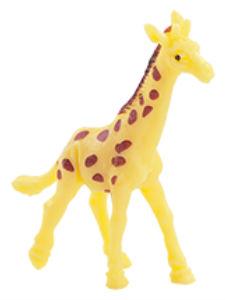 Žirafa síťovaná - Taziyah