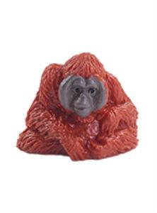 Orangutan bornejský - Ňuňák