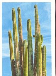 Obří kaktus (1/2)