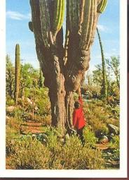 Obří kaktus (2/2)