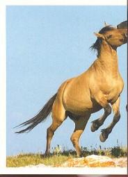 Mustang (1/2)