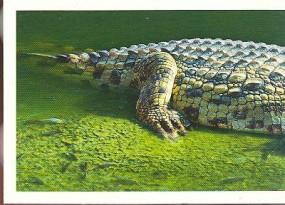 Everglades (1/2)