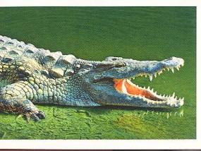 Everglades (2/2)