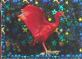 Ibis rudý