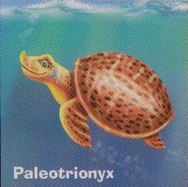 Paleotrionyx