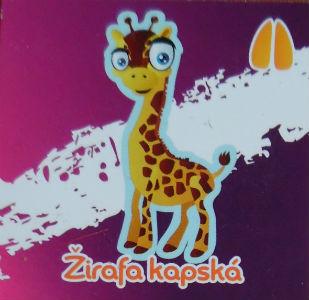 Žirafa kapská