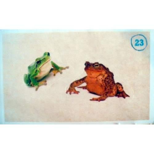 Rosnička zelená a Ropucha obecná