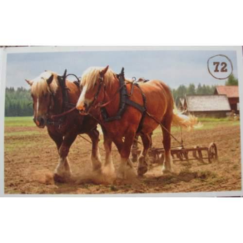 Koňská robota