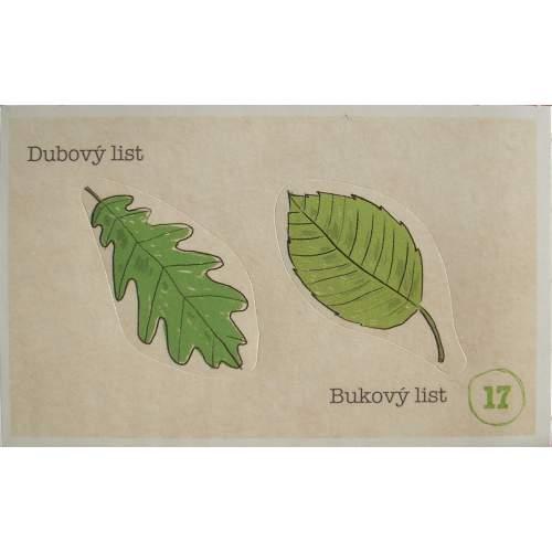 Dubový a bukový list