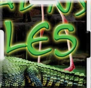 Krokodýl (2/2)