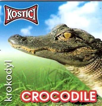 Crocodile - Krokodýl