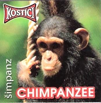 Chimpanzee - Šimpanz