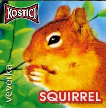 Squirrel - Veverka