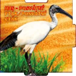 Ibis - posvátný pták