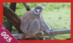 Poloopice z Madagaskaru