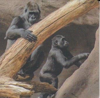 Gorilí povídání