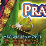 Meganeura Monyi