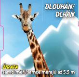 Dlouhán - Žirafa