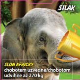 Silák - Slon africký