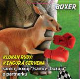 Boxer - Klokan rudý