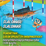 Slalomář - Plachetník širokoploutný