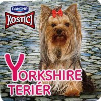 Yorkshire teriér