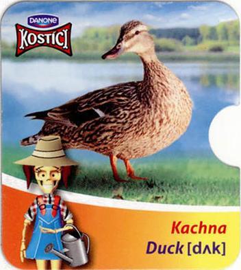 Kachna - Duck