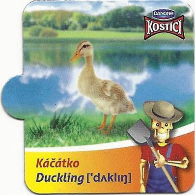 Káčátko - Duckling