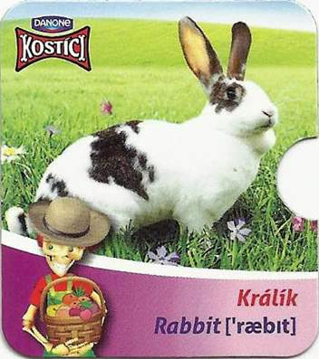 Králík - Rabbit