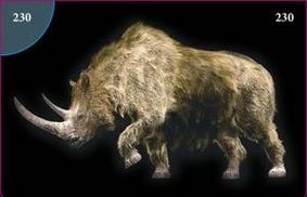 Nosorožec srstnatý