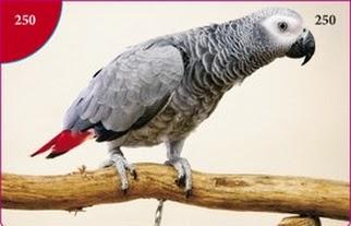 Papoušek žako